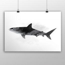 serene-shark-product